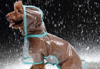 Top 10 Best Waterproof Dog Raincoats Review For 2019