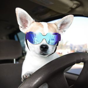 UV Goggles Sunglasses Water Protection Sun Glasses for Dog