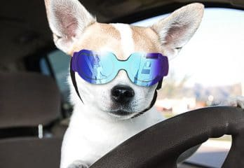 Top 15 Best Dog Sunglasses Review in 2019