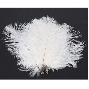 10- NSSTAR 50 x White Ostrich Feathers