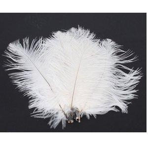 10- NSSTAR 50 x White Ostrich Feathers